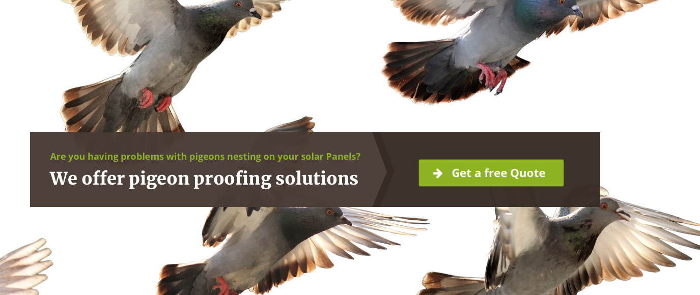 Pigeon proofing Solar panels